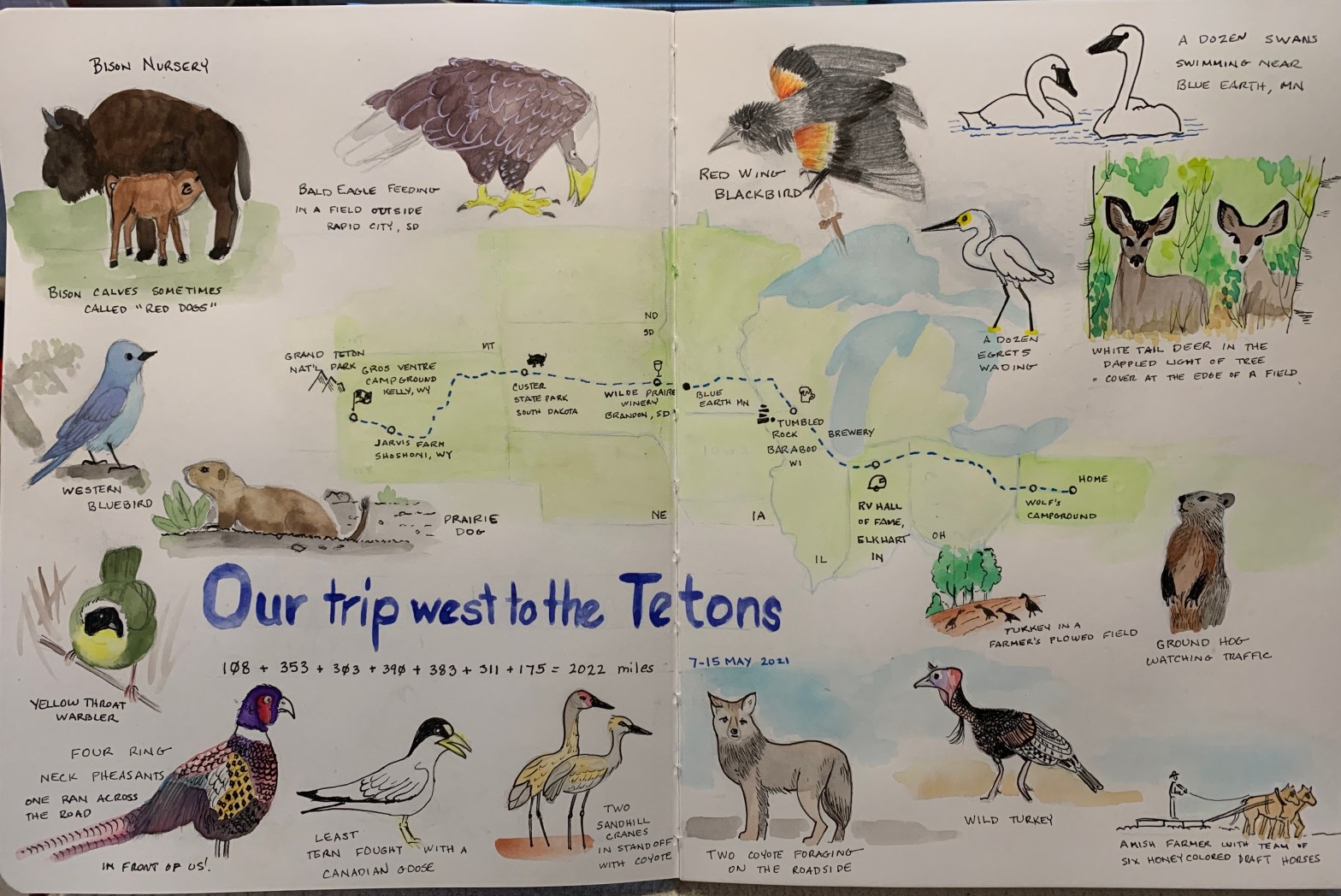 hand drawn map of trip from PA to WY with animal illustrations around border